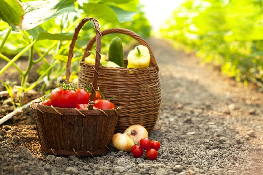 L'orto di Pietro Zito alimentato con Bio Vegetal