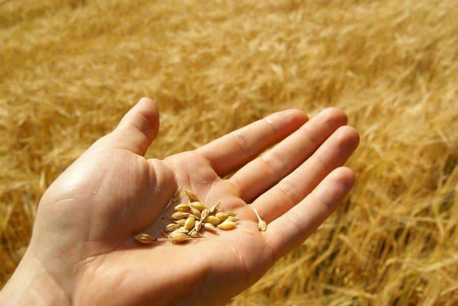 biofertilizzante naturale bio vegetal 1