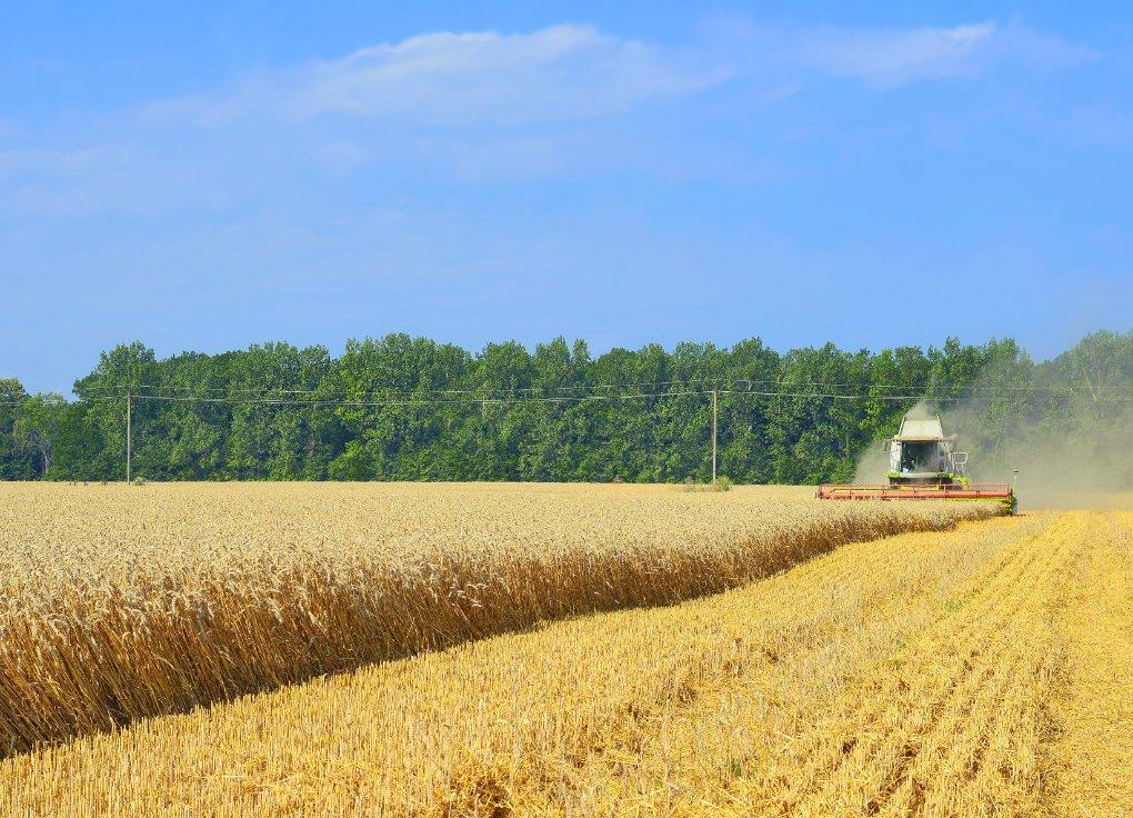 Il biofertilizzante, una risorsa per la produzione di cereali