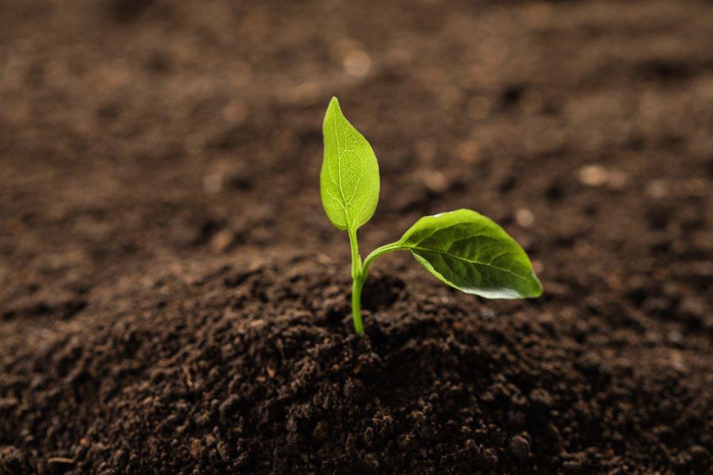 Progetto europeo Excalibur: l'Italia al primo posto nella ricerca per un'agricoltura più sana