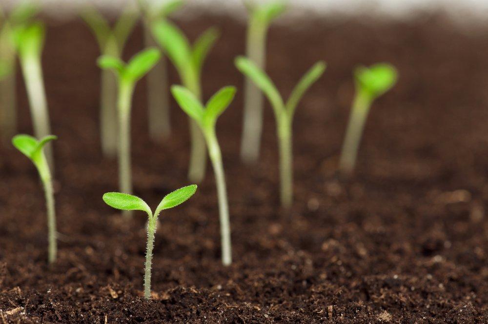 L'utilizzo agronomico dell'ammendante organico