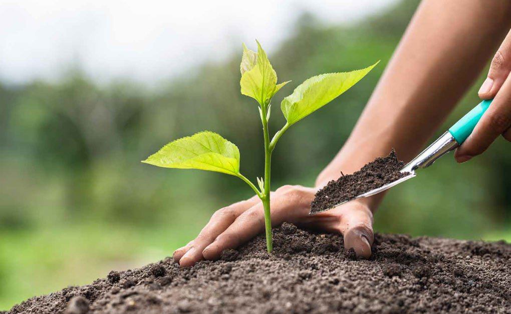 I vantaggi dei fertilizzanti organici