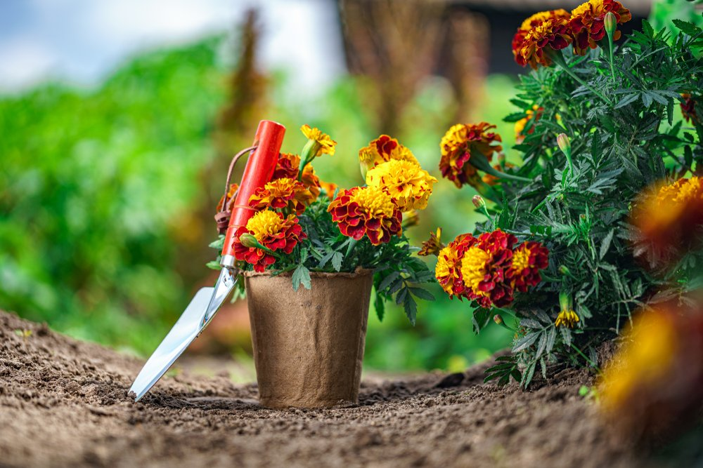 I fertilizzanti per le piante: come usarli