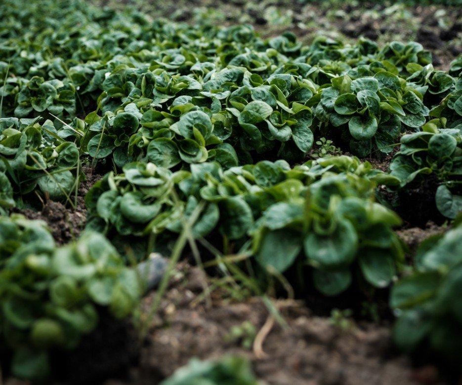 Come combattere la riduzione di sostanza organica nel terreno