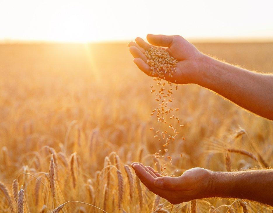 Prevenzione dell'inquinamento da nitrati e sostanza organica: i risultati di un nuovo studio sulle tecniche agronomiche