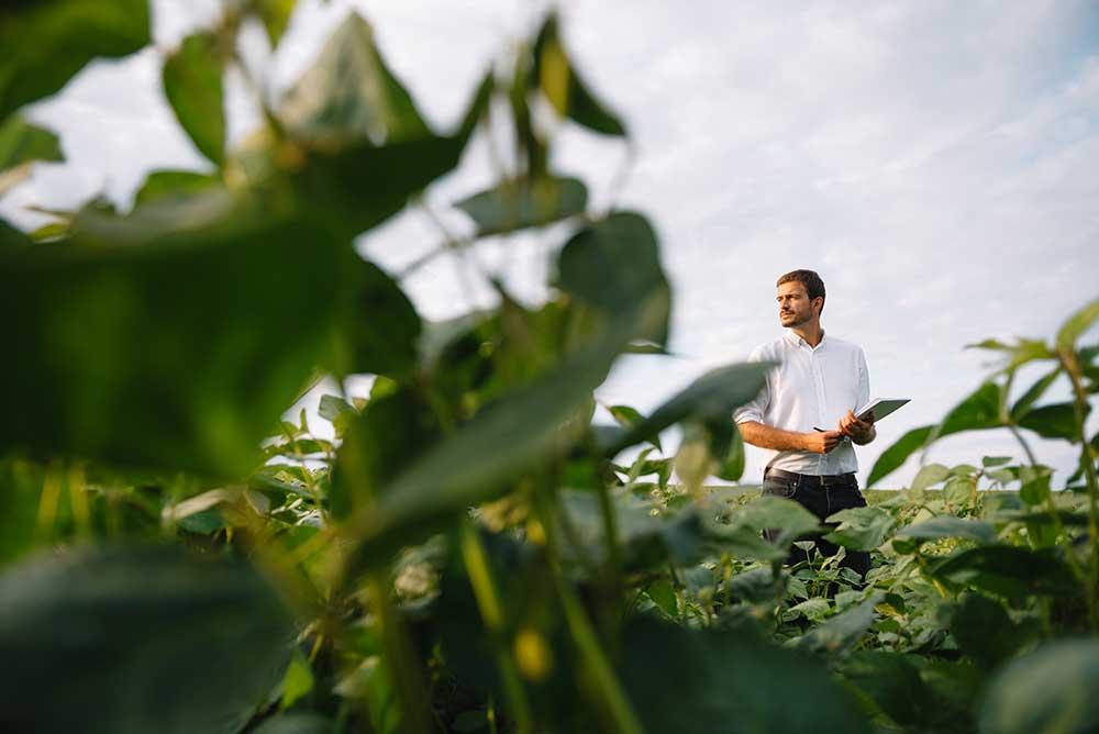 Bio Vegetal ricerchiamo agronomi